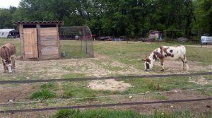 les animaux à la ferme