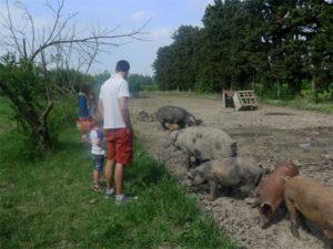 A la ferme, beaucoup d'animaux