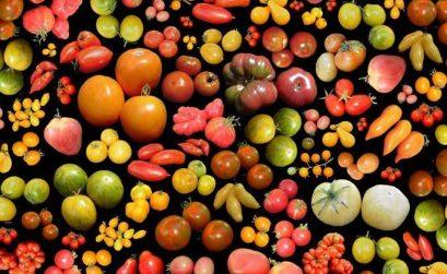des tomates dans la tête