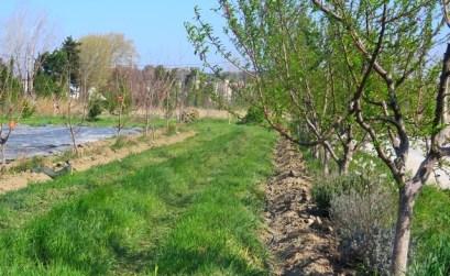 Agroforesterie à Avignon, ferme de la Durette