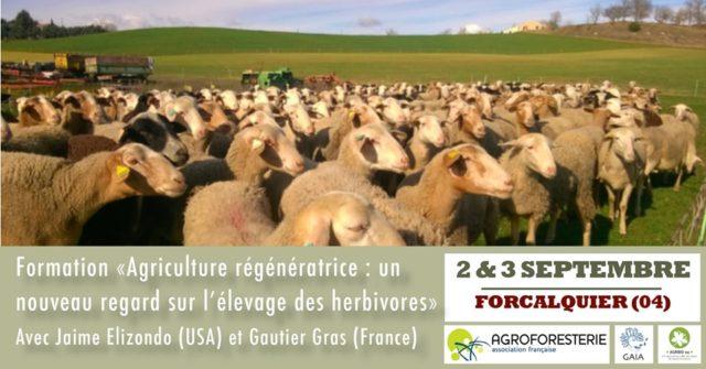 formation sur l'élevage en agroforesterie
