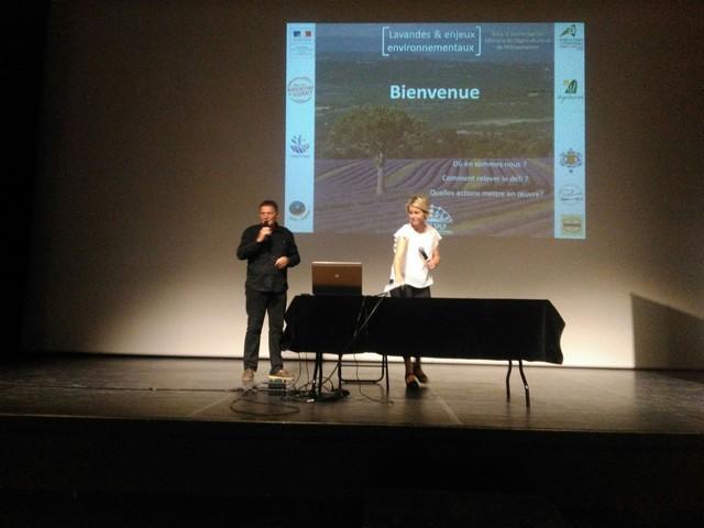lavandes de Provence en conférence