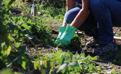 A Gignac, un arrêté anti-pesticides - ©Mairie de Gignac-la-Nerthe