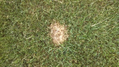 How Lawns get Sick