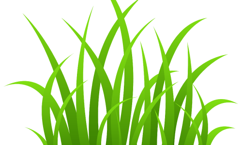Six Steps to a Perfect Lawn