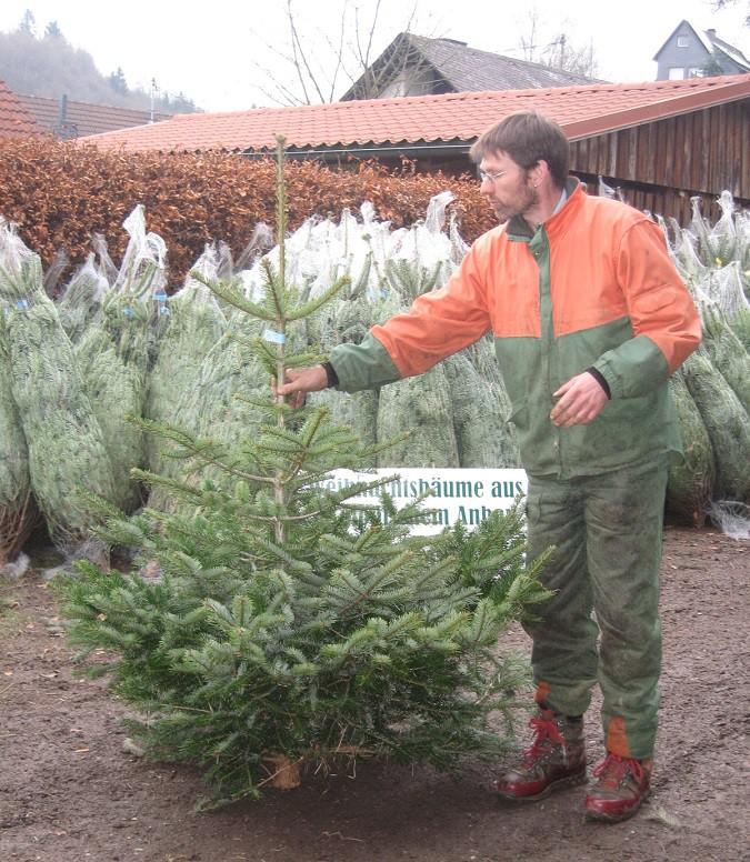 Gregor Kaiser setzt beim Weihnachtbaum auf Natur pur