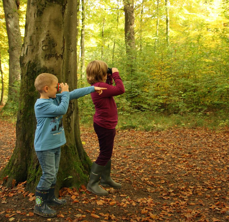 Herbstwaldrallye im Wildwald – Blickpunkt verlost Familienfreikarten