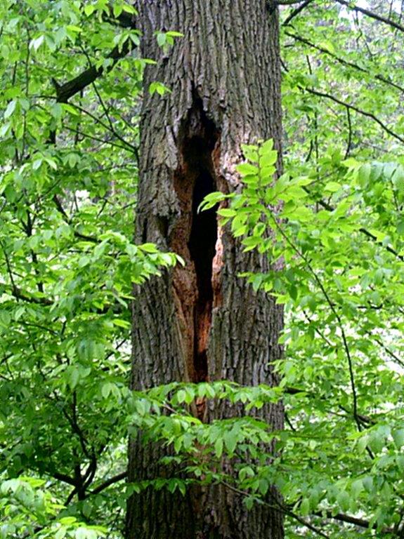 Im Wildwald werden Biotop-Bäume erfasst und kartiert