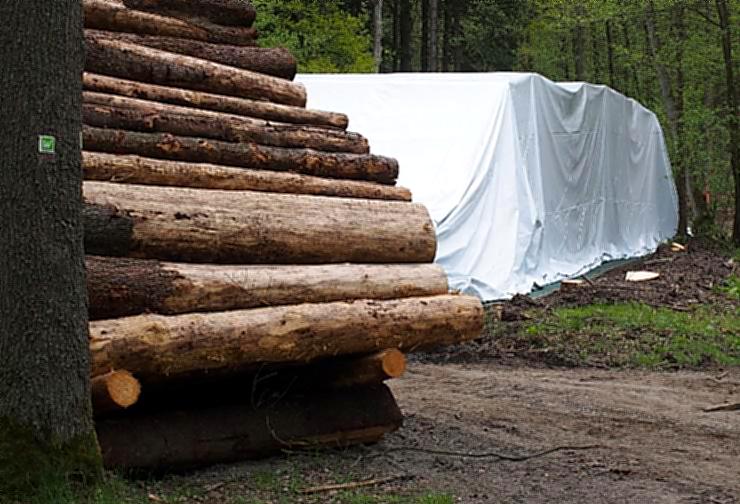 """""""Christo im Wald"""" – Holzkonservierung in Folienlagern wird getestet"""