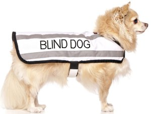 Blind Dog Coats