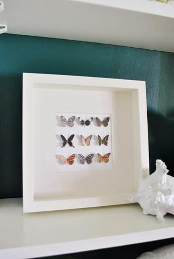 Butterfly Shadowbox on Shelf via Young House Love