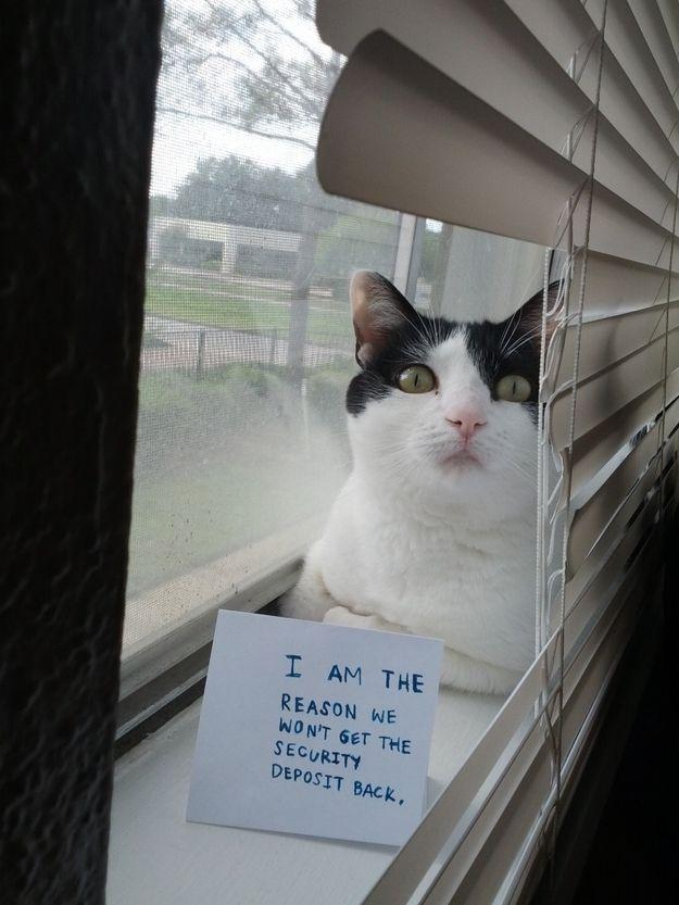 cat breaks blinds