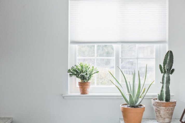 window with white cordless cellular shades and cacti on window sill.