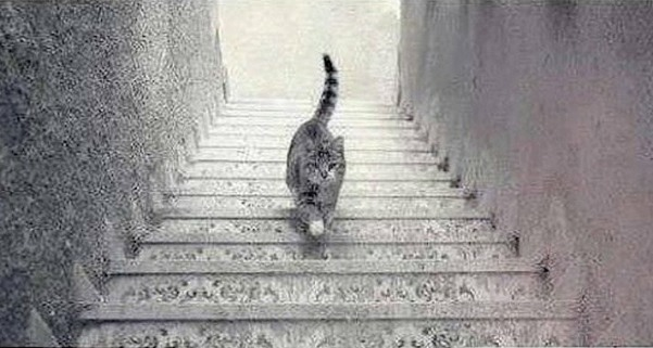 A picture of a cat on stairs. It is impossible to work out whether it is going up or down.