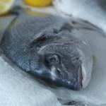 Ryba w diecie dziecka. Jakich ryb unikać, a które są najzdrowsze?