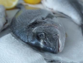 Jakich ryb unikać? Kilka słów o rtęci w rybach i certyfikacie MSC.