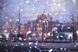 東京四年來最大的降雪量 雪中美景大集合!