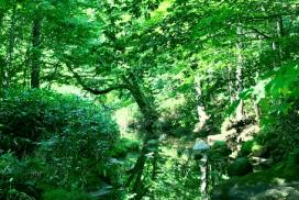 【東北秘境】感受大自然的氣色吧!青森奧入瀨溪流