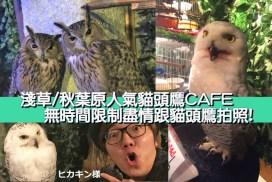 淺草/秋葉原人氣貓頭鷹CAFE 無時間限制盡情跟貓頭鷹拍照!