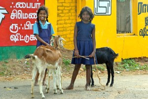 Tamil School Schools