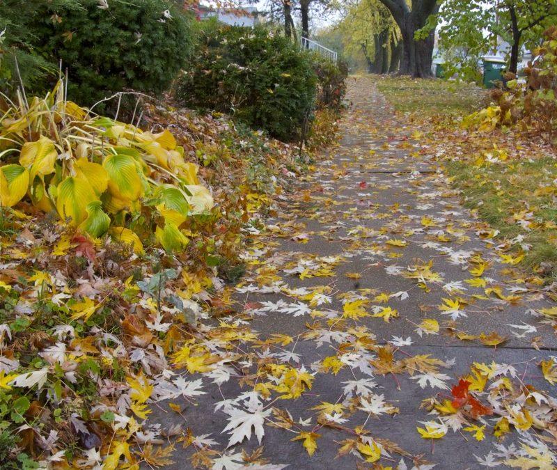 Rainy fall day in Fairfield, Iowa