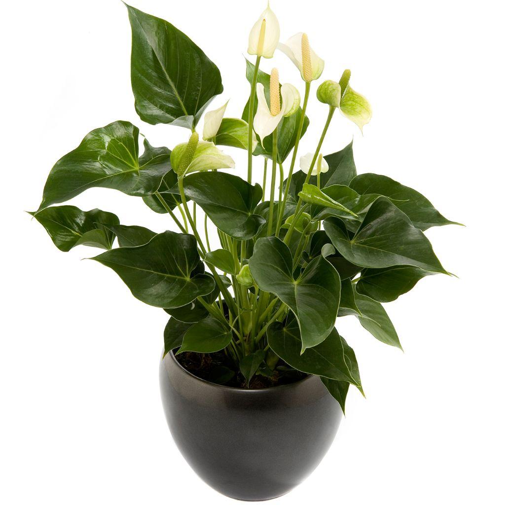 Planten bestellen  Laagste bezorgkosten in Roden