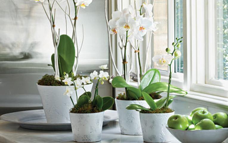 orchideepot