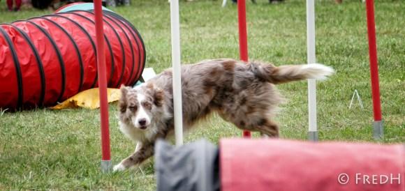 agility-dog-cormery-02