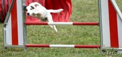 agility-dog-cormery-14