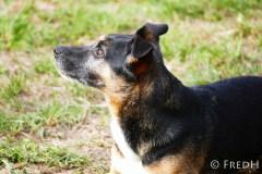 agility-dog-cormery-19