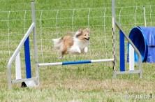 agility-cormery-2018-04