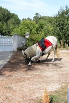 spectacle-equestre-abbatiale-14