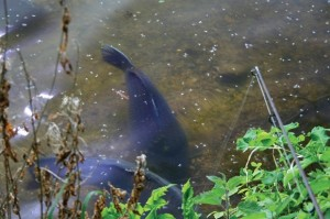 repérer le poisson est primordial pour pratiquer le stalking