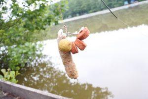 Stick pêche dans les nénuphars