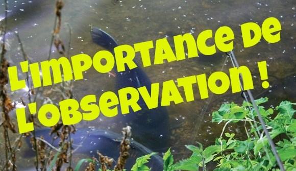 l'importance de l'observation