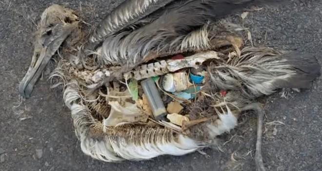 Animales-basura