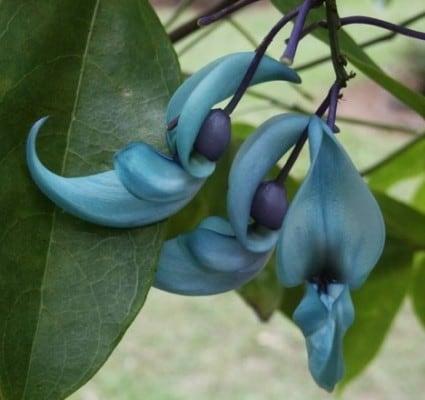 flor-de-jade-22