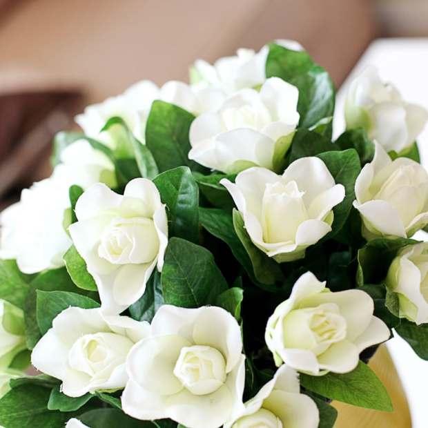 gardenia-foto.-79
