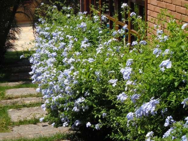 bela-emilia-flor-45