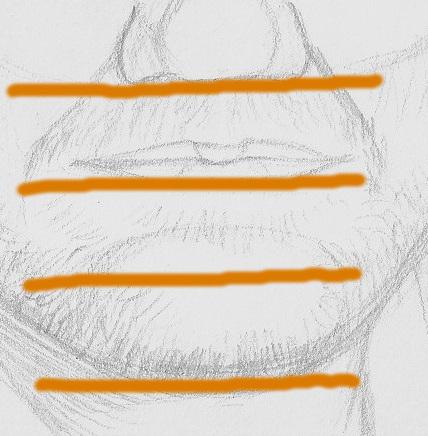 hauteur bouche