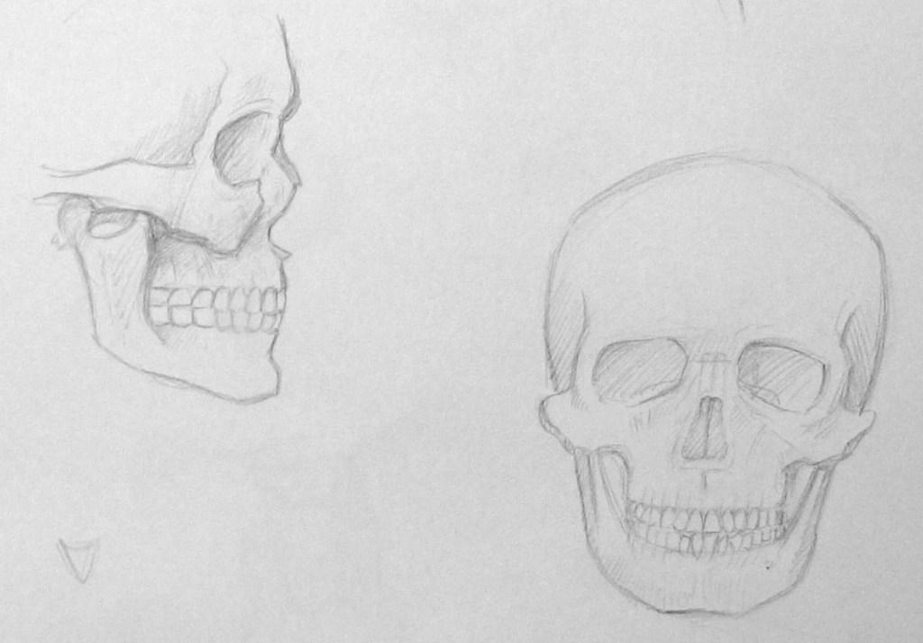 planche squelette
