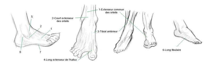 illustration positions pieds_j