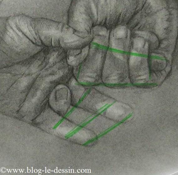 Une planche où vous voyez les rapports de proportions entre les phalanges de chaque main.