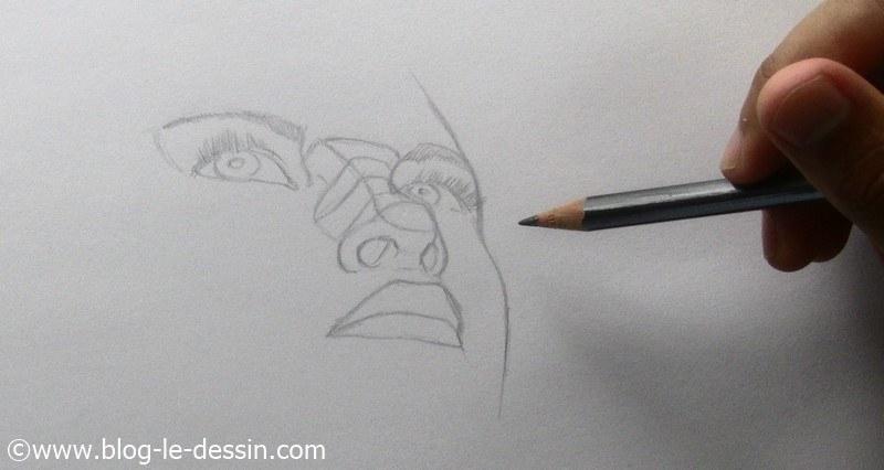 tracer l'orifice nasal vu du dessous