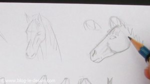 planche illustration apprendre dessiner tete cheval facilement