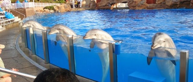 Dresseur de dauphins n'est pas un métier d'avenir...