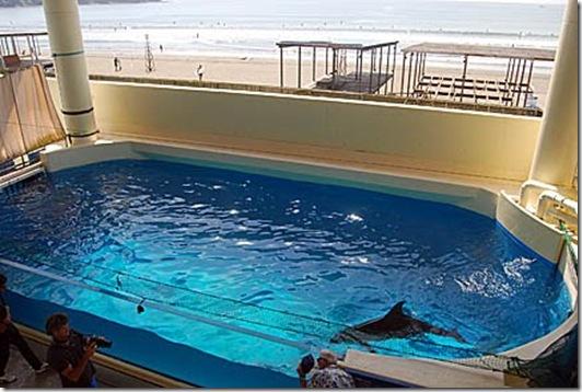 Mark J. Palmer - Aquarium d'Enoshima à Kamakura, où un dauphin vit dans un bassin ridiculement petit...