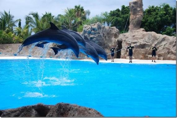 Photo de mavur - dauphins captifs dans un delphinarium