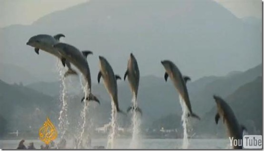 Reportage d'Al Jazeera à Taiji - Des dauphins captifs au Japon