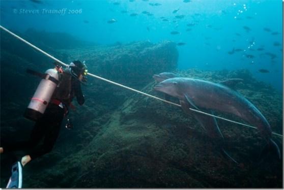 Steven Trainoff - les dauphins s'amusent aussi à imiter les hommes
